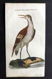 Brightly (Pub) 1815 Hand Col Bird Print. Coote Footed Tringa